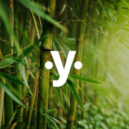 Módulo Bamboo - Reencontro Yoga Online